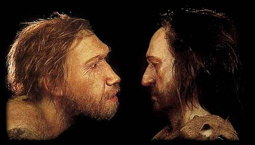 neandertal-sapiens